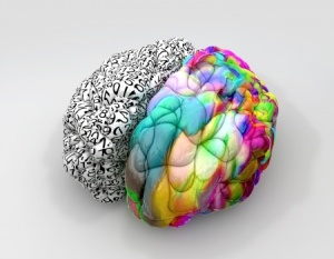 17948401_s - Creative Analytical Brain