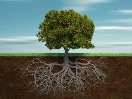 tree download