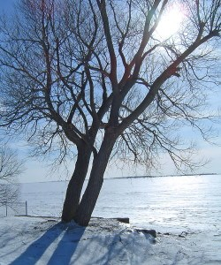 photo Kratkys-in-winter--250x300