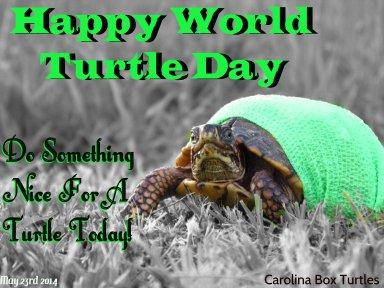 2016 5 23 world-turtle-day-2014