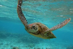 2016 5 23 World Turtle Dayturtle 4