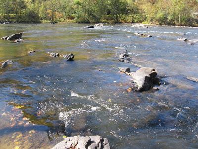 doebranch stream