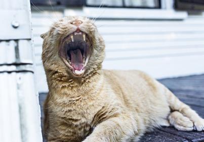 yawning-349753_640
