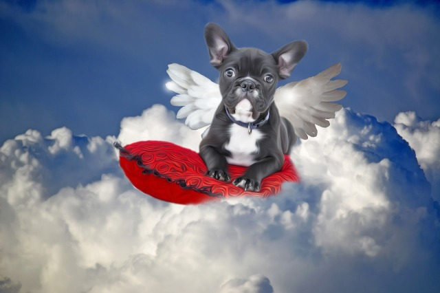 bulldog-1949724_1280