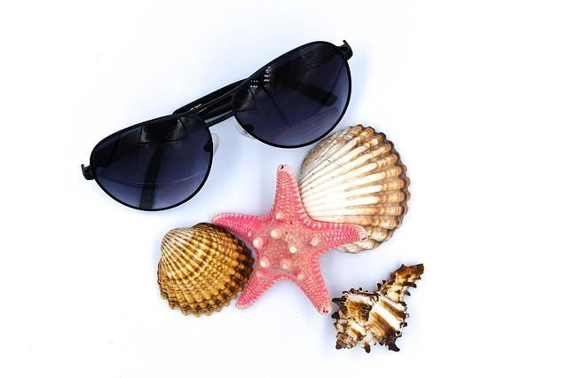 seashell-3220502_640