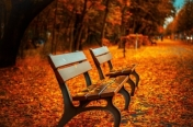 autumn-avenue-bench