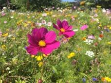 flowers-2324252_640